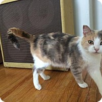 Adopt A Pet :: Lillian - Woodstock, ON