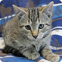Adopt A Pet :: Hip Cat - Hillsdale, IN