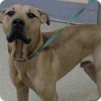 Adopt A Pet :: A015550 - Tavares, FL