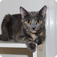 Adopt A Pet :: Gracie - Richmond, VA