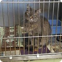 Adopt A Pet :: Quincey - Sauk Rapids, MN