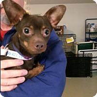 Adopt A Pet :: Doni - Muskegon, MI
