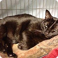 Adopt A Pet :: Kitzer - Kerrville, TX