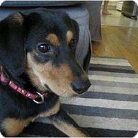 Adopt A Pet :: Ninja - Richmond, VA