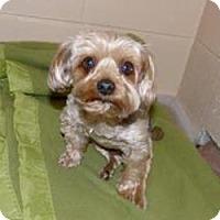 Madison Mn Dog Rescue