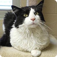 Adopt A Pet :: Truman - Tulsa, OK