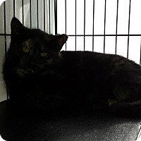 Adopt A Pet :: Winnie - Madison, WI