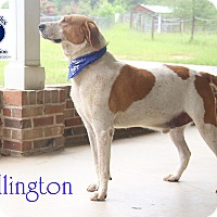 Adopt A Pet :: Wellington - Orangeburg, SC