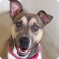 Adopt A Pet :: MICHELLE - Kyle, TX
