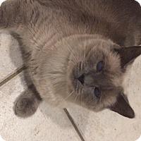 Adopt A Pet :: Storm - Sacramento, CA