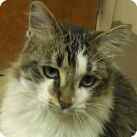Adopt A Pet :: Linus - Wickenburg, AZ