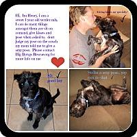 Adopt A Pet :: Henry - Livermore, CA