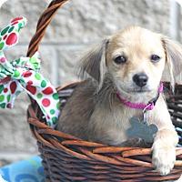 Adopt A Pet :: Swindon - Woonsocket, RI