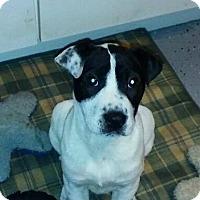 Adopt A Pet :: Dorey - Round Lake Beach, IL