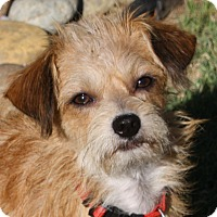Adopt A Pet :: Ziggy - Edmonton, AB