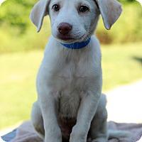 Adopt A Pet :: Neville - Waldorf, MD
