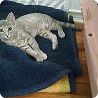 Adopt A Pet :: Misty - Davison, MI