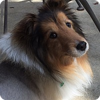 Adopt A Pet :: Sable (adoption pending) - Mission, KS