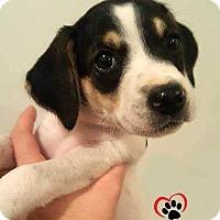 Adopt A Pet :: Chespin - Pending adoption - Council Bluffs, IA