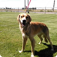 Adopt A Pet :: JD - E. Wentachee, WA