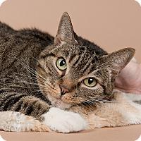 Adopt A Pet :: Chauncy - Wilmington, DE