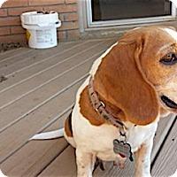 Adopt A Pet :: Jeri - Houston, TX