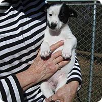 Adopt A Pet :: ETHEL MAE - South Burlington, VT