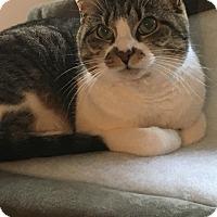 Adopt A Pet :: Nermal Courtesy Posting - Cincinnati, OH