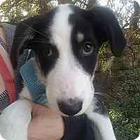 Adopt A Pet :: Elli - Thousand Oaks, CA