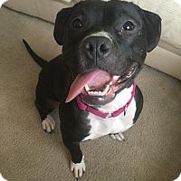Adopt A Pet :: Manny Mae - Frankfort, IL
