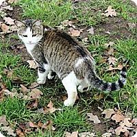 Adopt A Pet :: Karen - Muldrow, OK