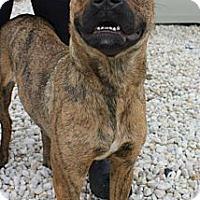 Adopt A Pet :: Mindy - Bardonia, NY