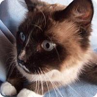 Adopt A Pet :: Chaplin - Ennis, TX