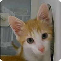 Adopt A Pet :: Butterfinger - Maywood, NJ