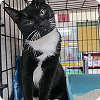 Adopt A Pet :: Scats - Riverhead, NY