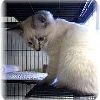 Adopt A Pet :: Lotus - Shelton, WA