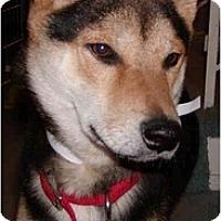 Adopt A Pet :: Lucky - Marysville, CA