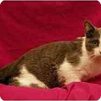 Adopt A Pet :: Kehei - Sacramento, CA