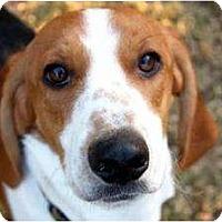 Adopt A Pet :: Franny - Phoenix, AZ