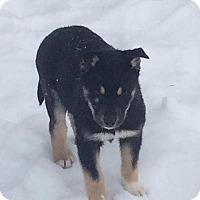 Adopt A Pet :: Pluto - Saskatoon, SK