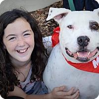 Adopt A Pet :: JOE - Redondo Beach, CA