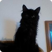 Adopt A Pet :: Tiny - Fairborn, OH