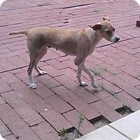 Adopt A Pet :: JACKIE - EDEN PRAIRIE, MN