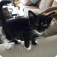 Adopt A Pet :: Athena - Berkeley Hts, NJ