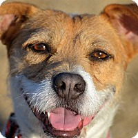 Adopt A Pet :: Macie - Meridian, ID