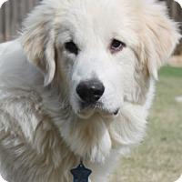 Adopt A Pet :: Zander  Adopted - Tulsa, OK