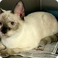 Adopt A Pet :: Chula - Chattanooga, TN