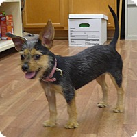 Adopt A Pet :: Cricket - Manning, SC