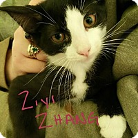 Adopt A Pet :: Ziyi Zhang - Chicago, IL
