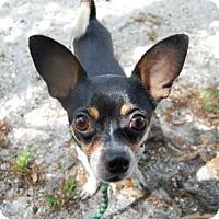 Adopt A Pet :: Barney - Bradenton, FL